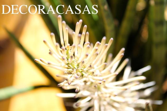 florlança3