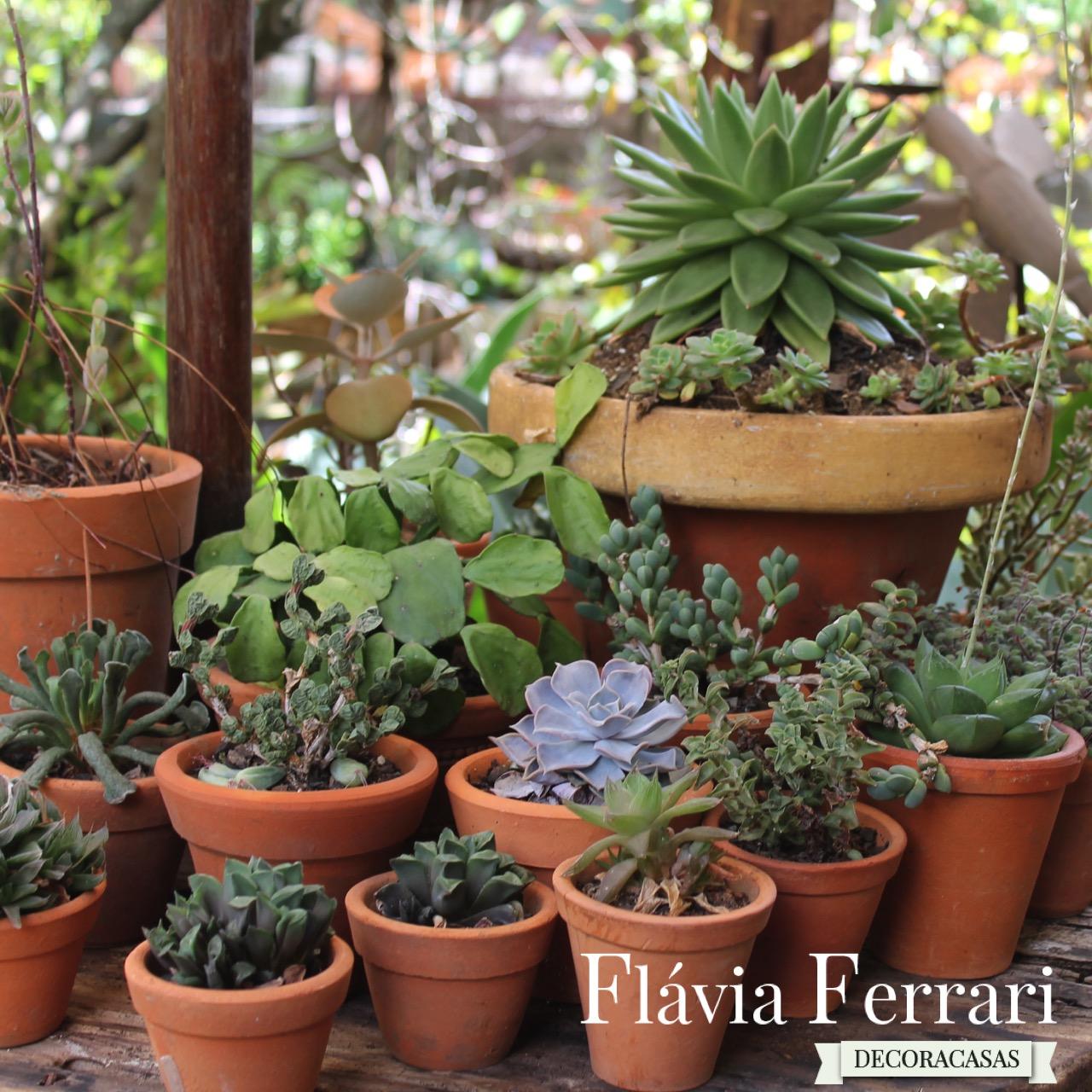 suculentas plantas arranjos de plantas suculentas por flávia ferrari