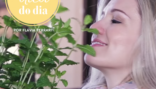 como fazer uma horta em casa | #aDicadoDia