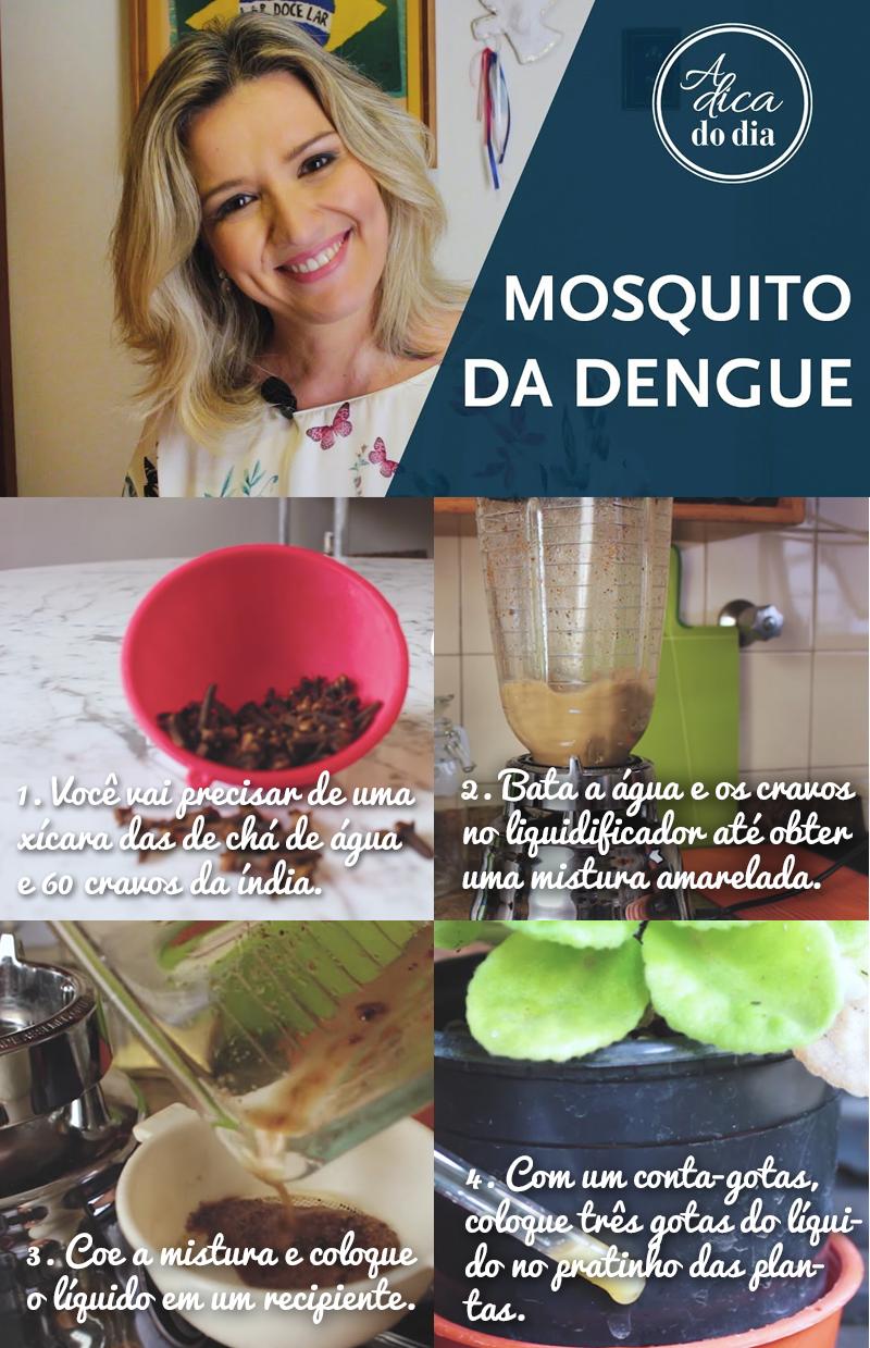 Saiba como fazer um inseticida natural contra o mosquito da dengue