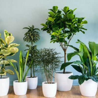COMO CUIDAR DAS FLORES E PLANTAS